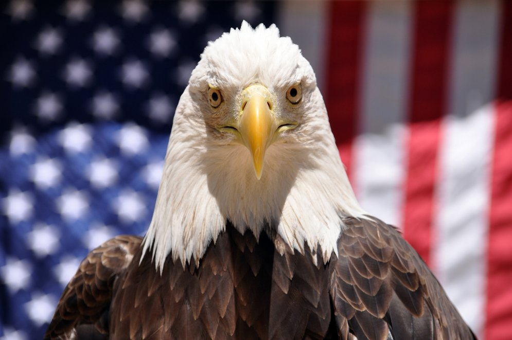 Белоголовые орланы знают об этом, и поэтому при виде фотографа всегда поворачивают голову. Вот так-т