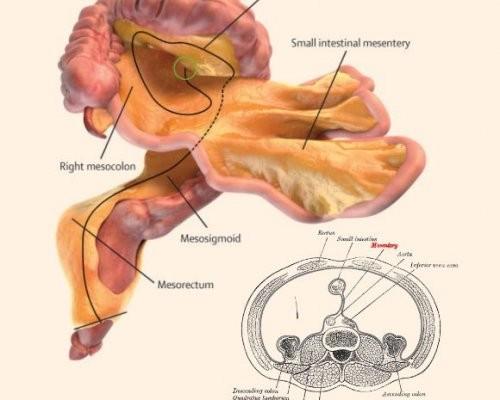 Ученые сообщили обобнаружении нового органа в человеческом теле