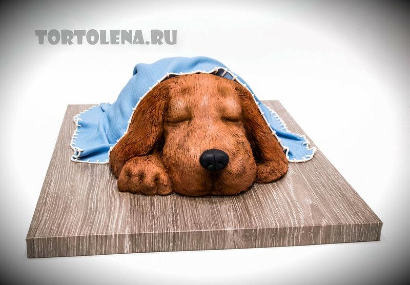 собака--СЖАТ---DSC_1247-2-2.jpg