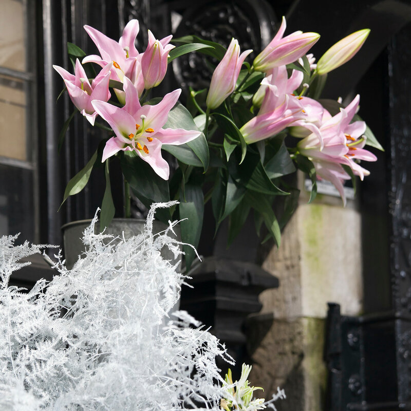Bouquet of pink lilies near shop for sale