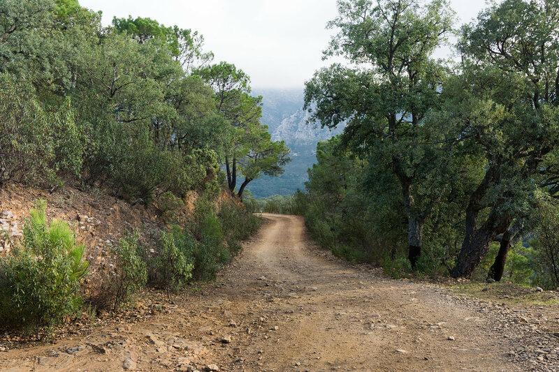 дорога в лесу из пробкового дуба в природном парке Sierra de las Nieves в андалусии