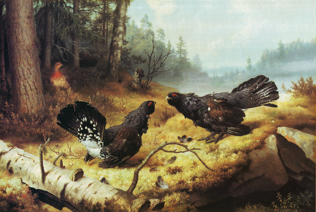 """The Fighting Capercaillies (1886)"""