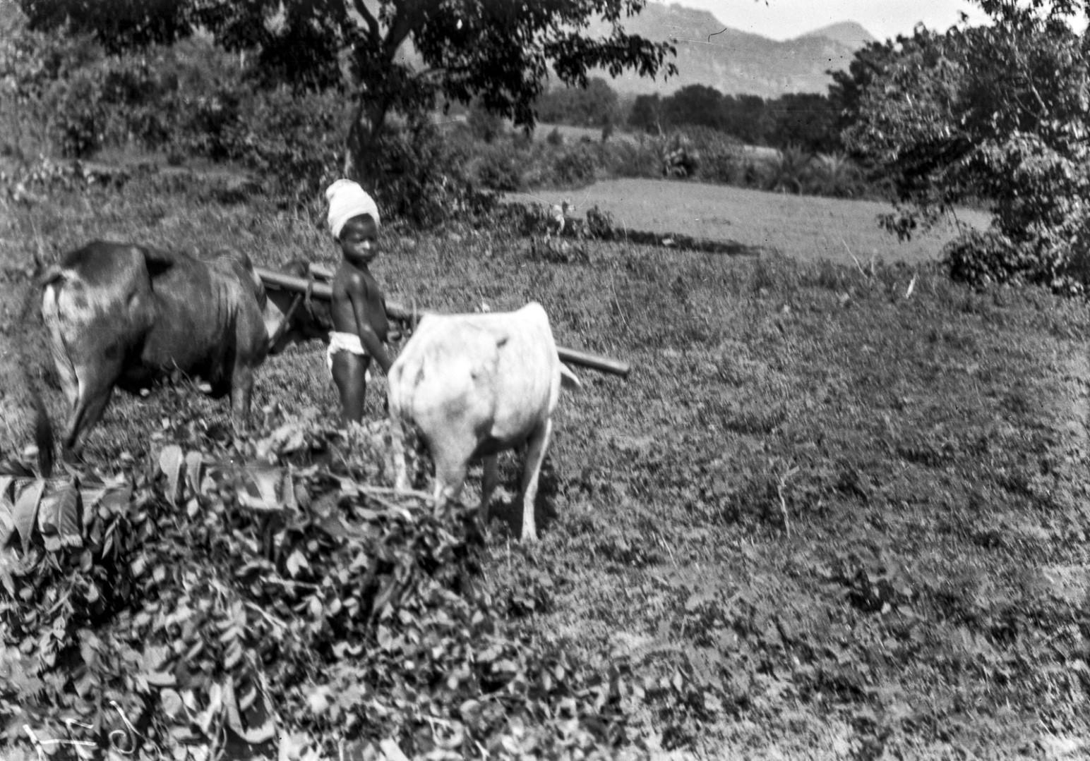 732. Орисса. Мальчик с буйволами