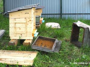 Пересадка пчёл в новый улей