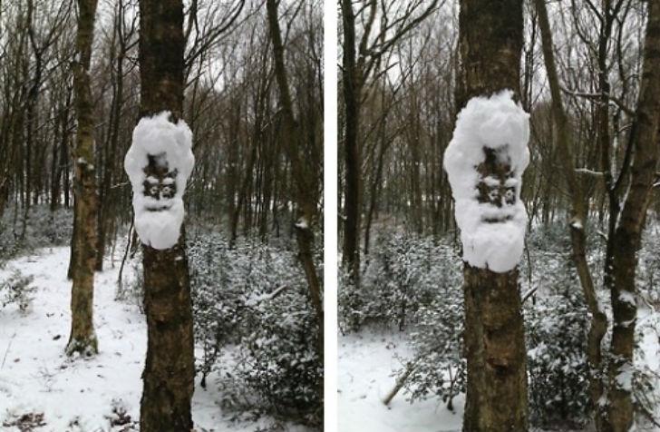 Снежное лицо на дереве.