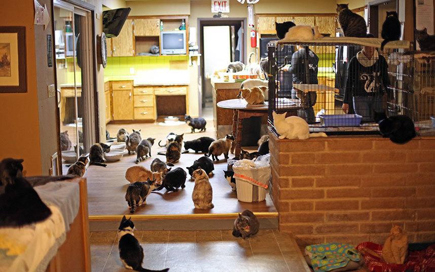 Женщине помогают волонтеры. Они вместе кормят котов и следят за их здоровьем.
