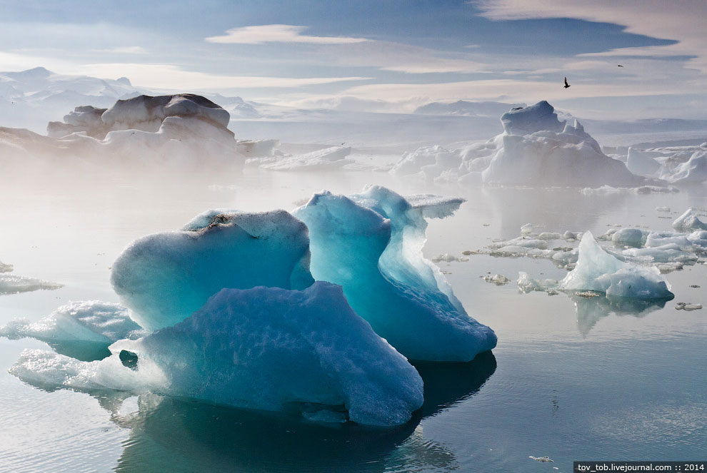 Большинство туристов катаются по Ледниковой лагуне на вот таких амфибиях. Стоимость удовольстви