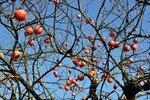Плоды зимы