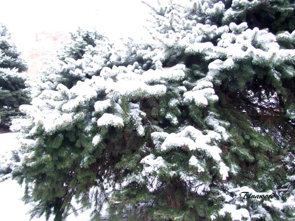Вот-и-снег-7.jpg
