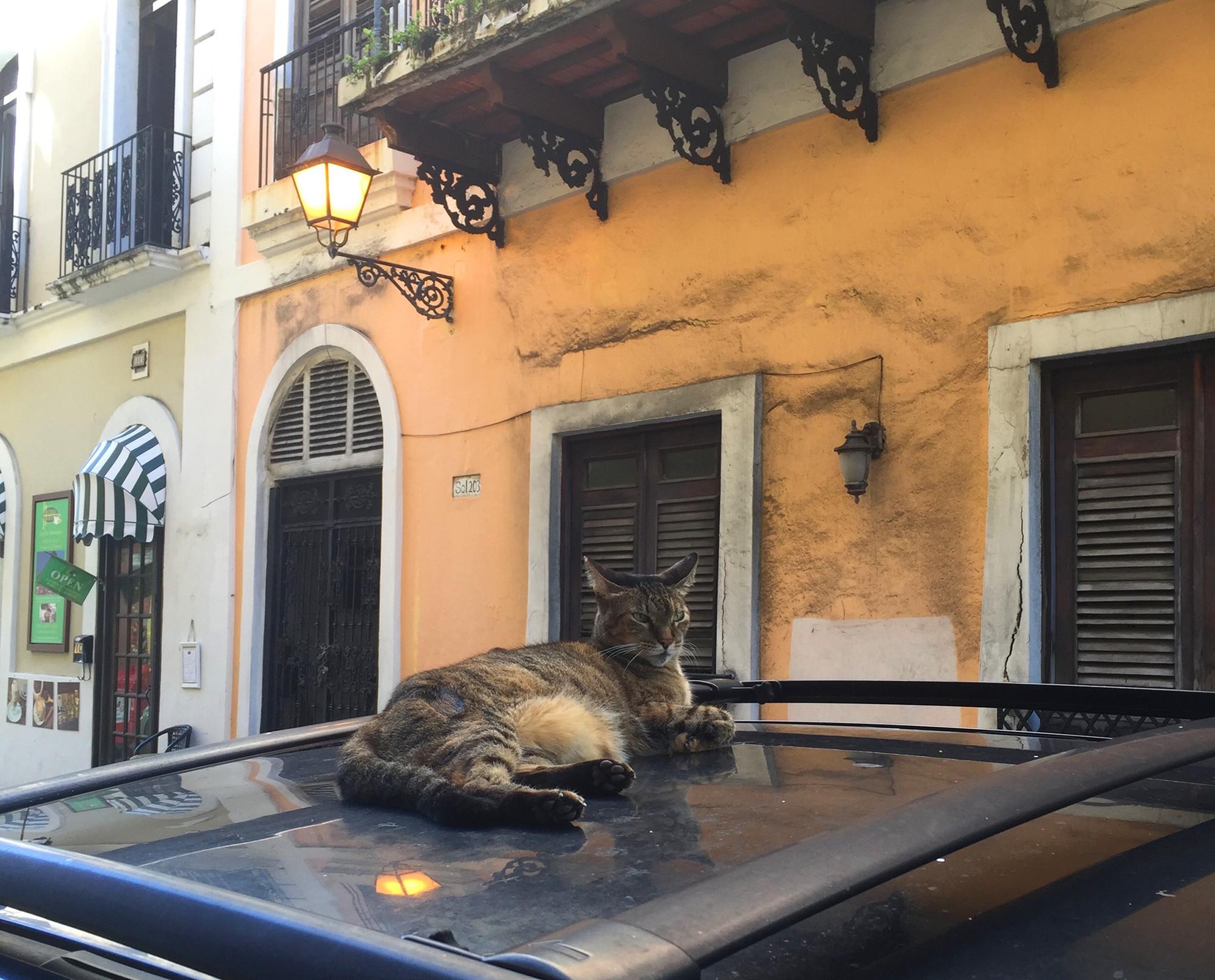 Пуэрто-Рико, январь 2017