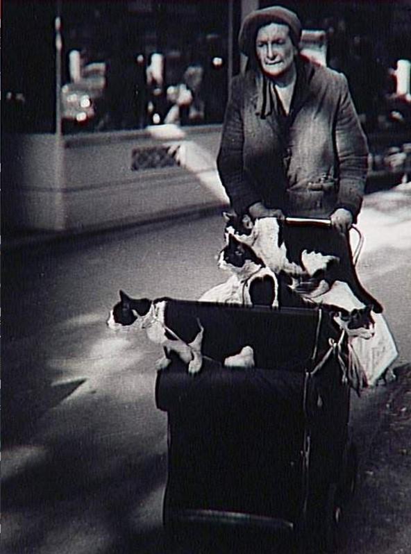 1946. Дама с кошками