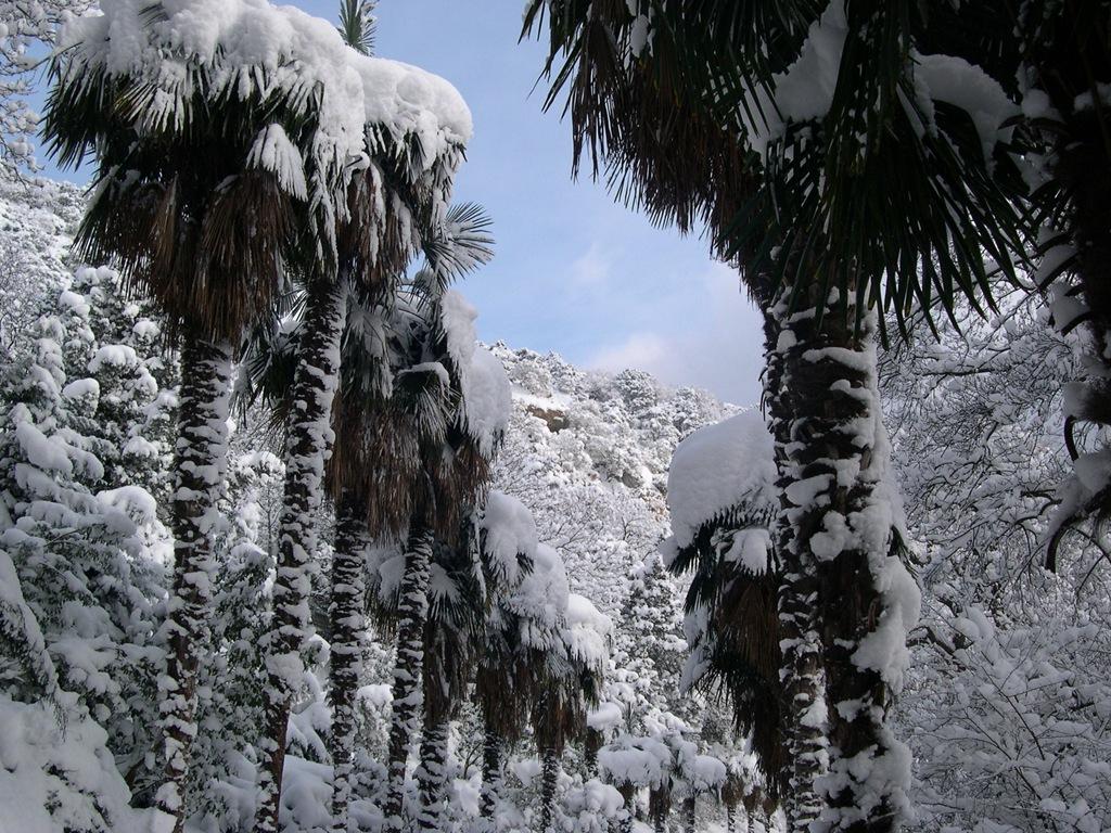 Ялта. Снег на пальмах
