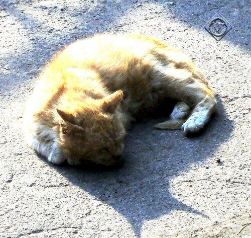 Спящий на тени