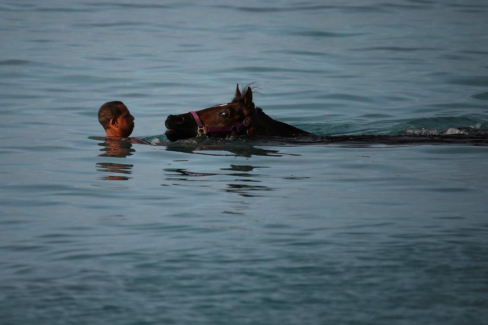 5. В первый раз лошади очень настороженно заходят с воду и могут проявлять боязнь на глубине. Д