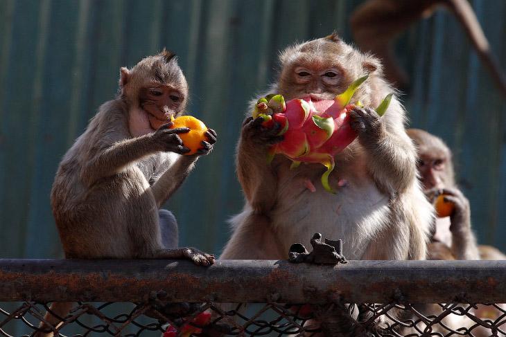 1. Как уже говорилось, город знаменит обезьянами. (Фото Chaiwat Subprasom | Reuters):