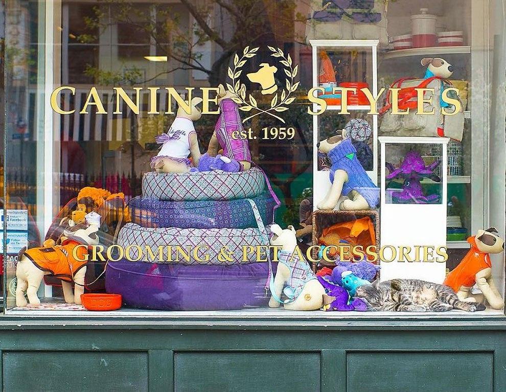 Представители семейства кошачьих, живущие в магазинах Нью-Йорка. Серия снимков от Тамар Арсланьян (Tamar Arslanian) (10 фото)