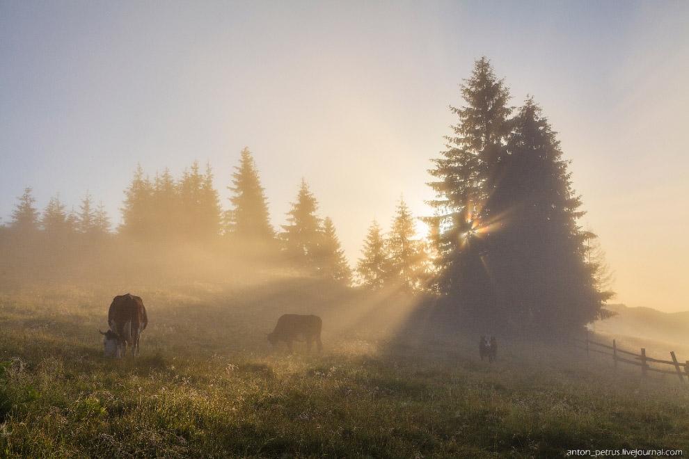 9. А туман пронзали лучи рассветного солнца.