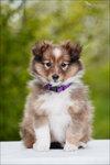 Puppy-Grazel-16.jpg