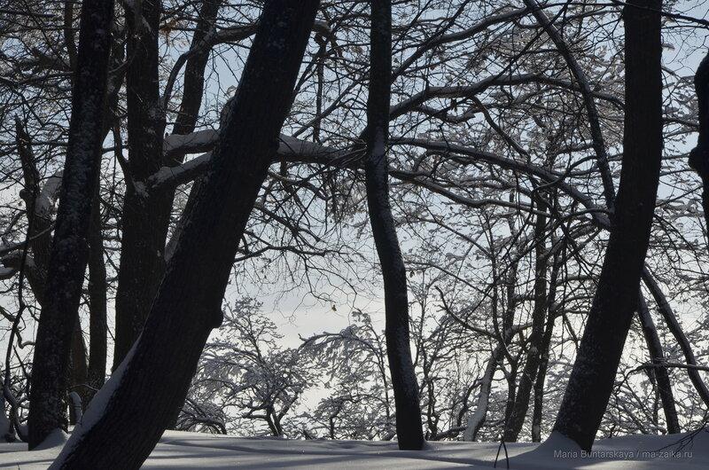 Кумысная поляна, 10-я Дачная, 29 января 2017 года