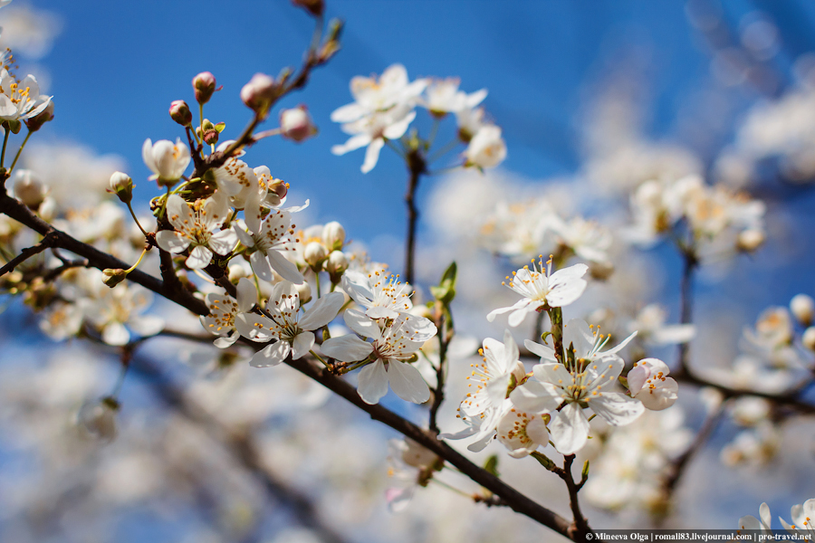 А у нас весна...
