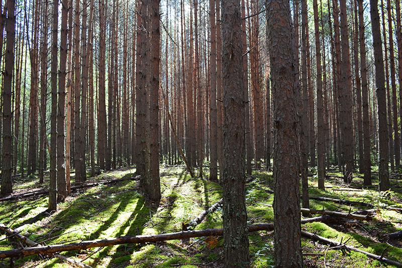 леса 11.jpg