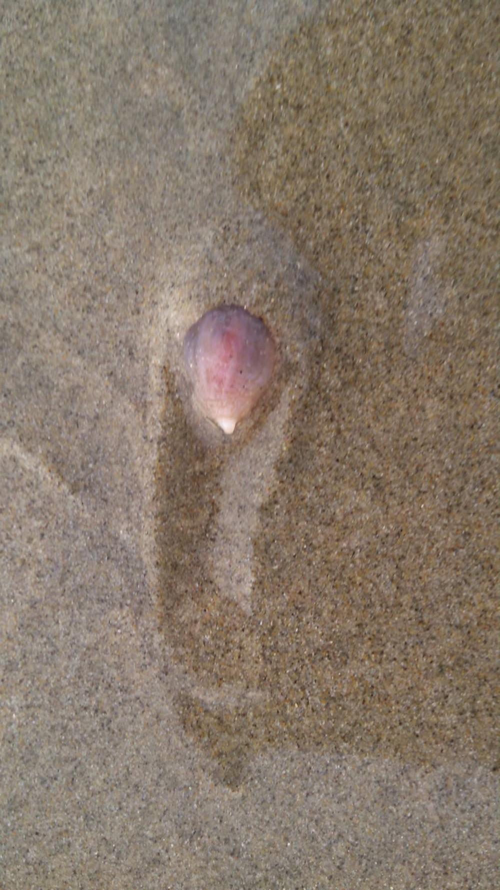 Тысячи странных существ вышли на пляж в Калифорнии