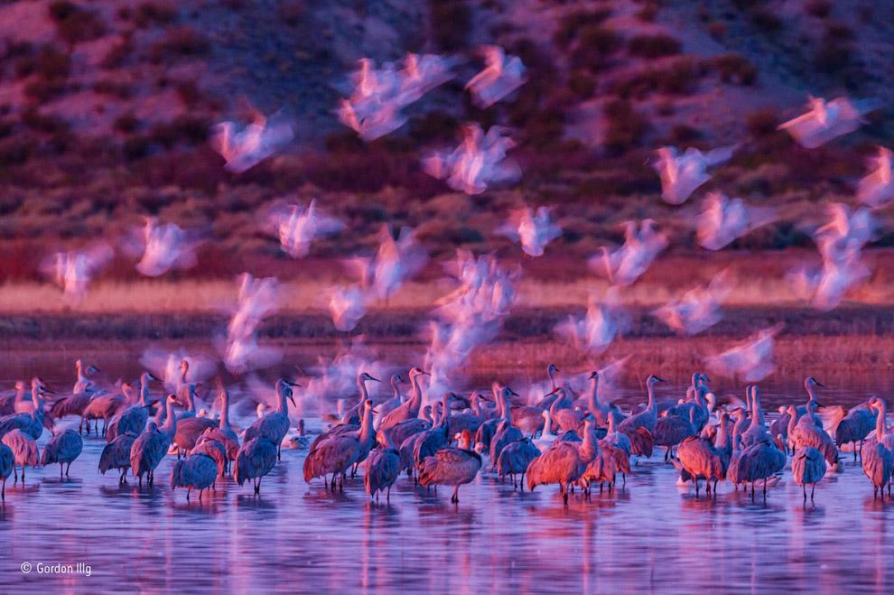 17. Колибри пьет нектар. (Фото Cristobal Serrano | Wildlife Photographer of the Year 2016):