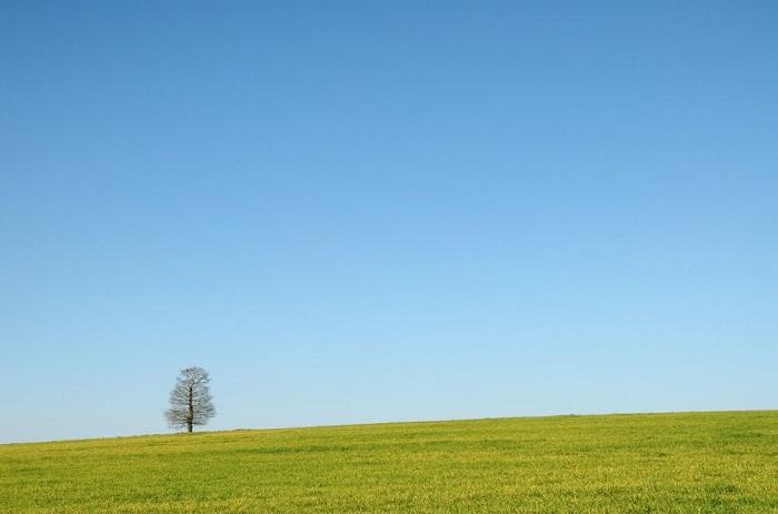 18. Одинокое дерево