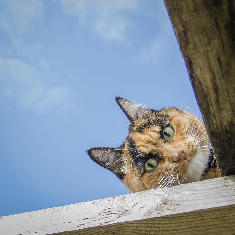 Котик выглядывает картинка