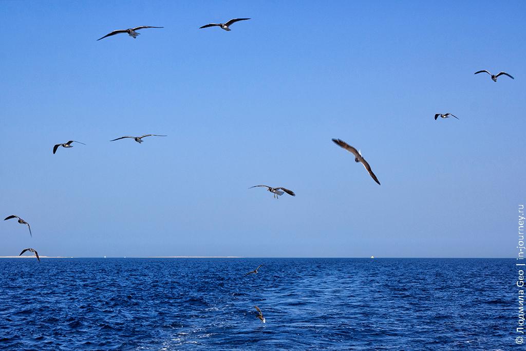 чайки летят за яхтой