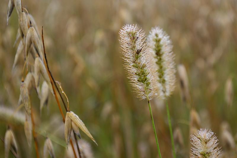 капельки трава 13.jpg