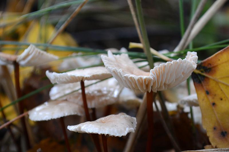 грибной мир 16 4.jpg
