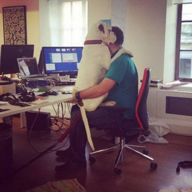 Люди веселятся на работе
