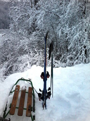 Санки или лыжи?