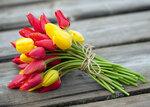 **Тюльпаны, ромашки (фото)