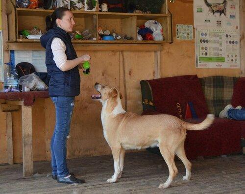 Фил и Ластик собака из приюта москва