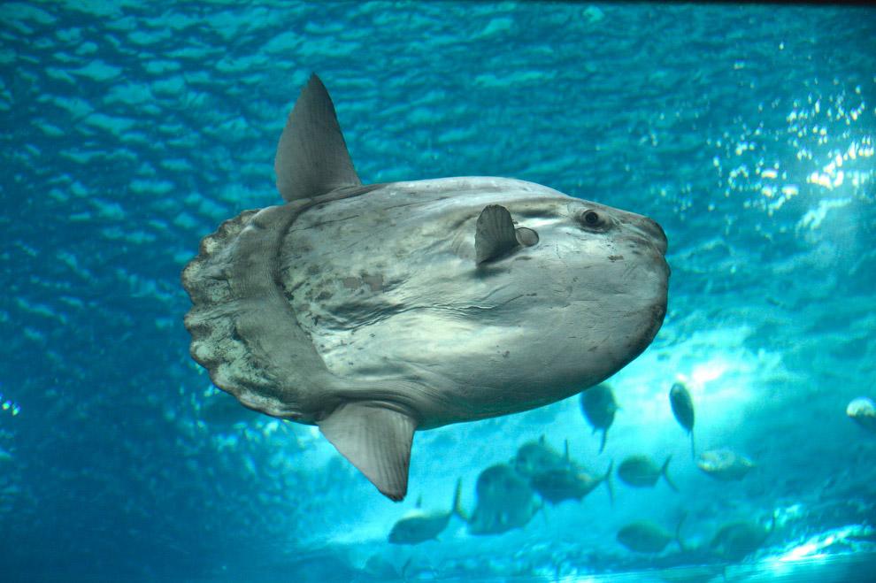 Нуса-Пенида — самый крупный из трех лежащих у восточного побережья Бали островов с практически