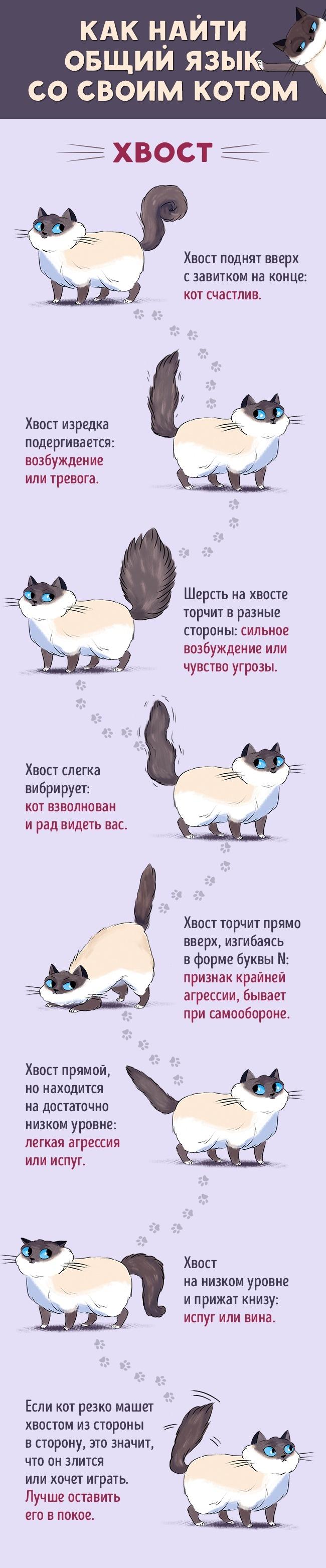 Как найти общий язык сосвоим котом (6 фото)