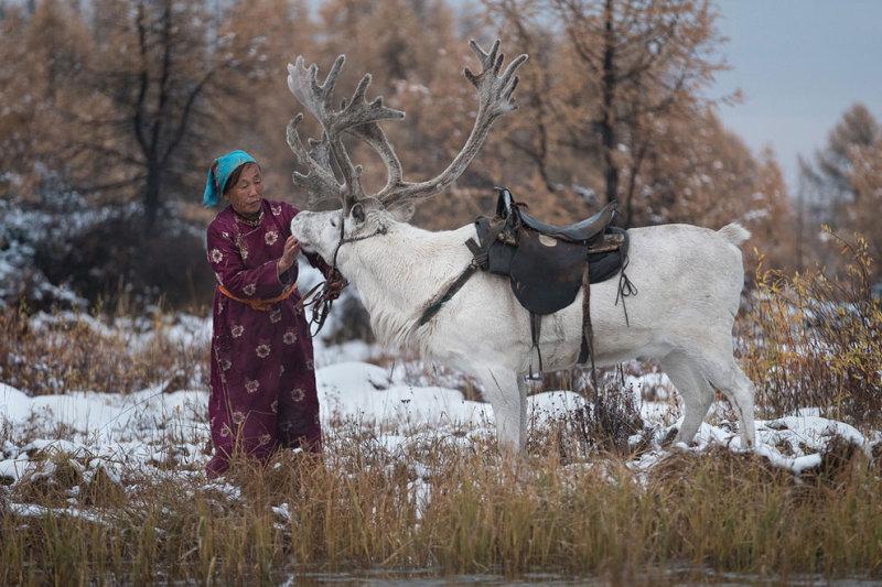 Пурев гладит белоснежного оленя.