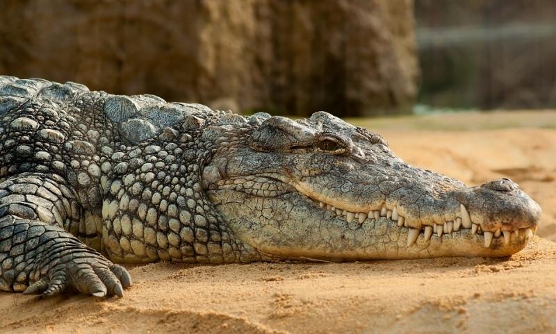 ВКитайской республике обнаружили кости крокодилов возрастом неменее 2,7 тыс. лет