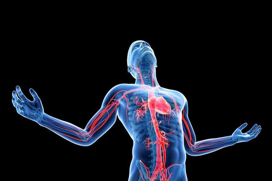 Ученые раскрыли загадку появления людей с 2-мя сердцами