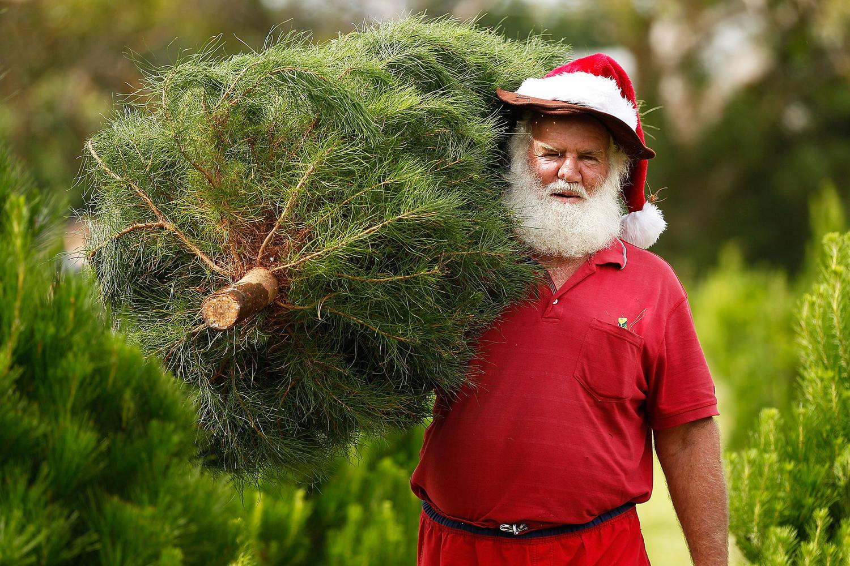 Австралийская версия Санта-Клауса, Сидней.