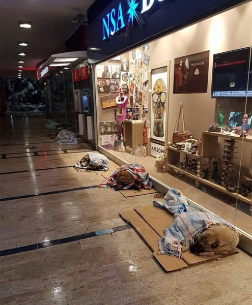 Как жители Стамбула помогали бездомным животным во время похолоданий