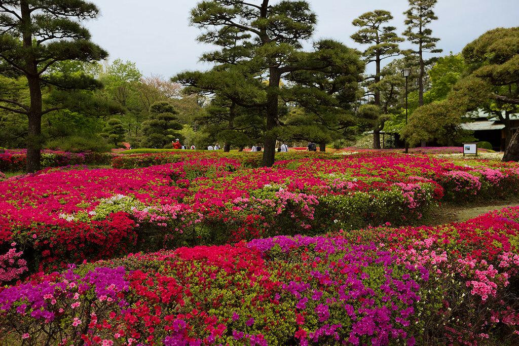 Токио. Парк иператорского дворца.