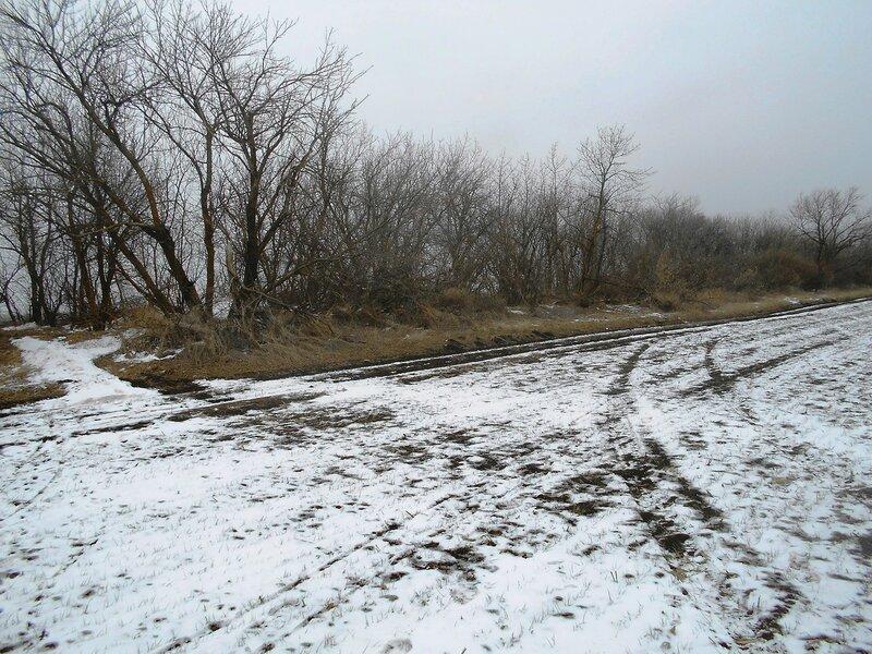 Лесок и поле, снег Зимы ... DSCN1159.JPG