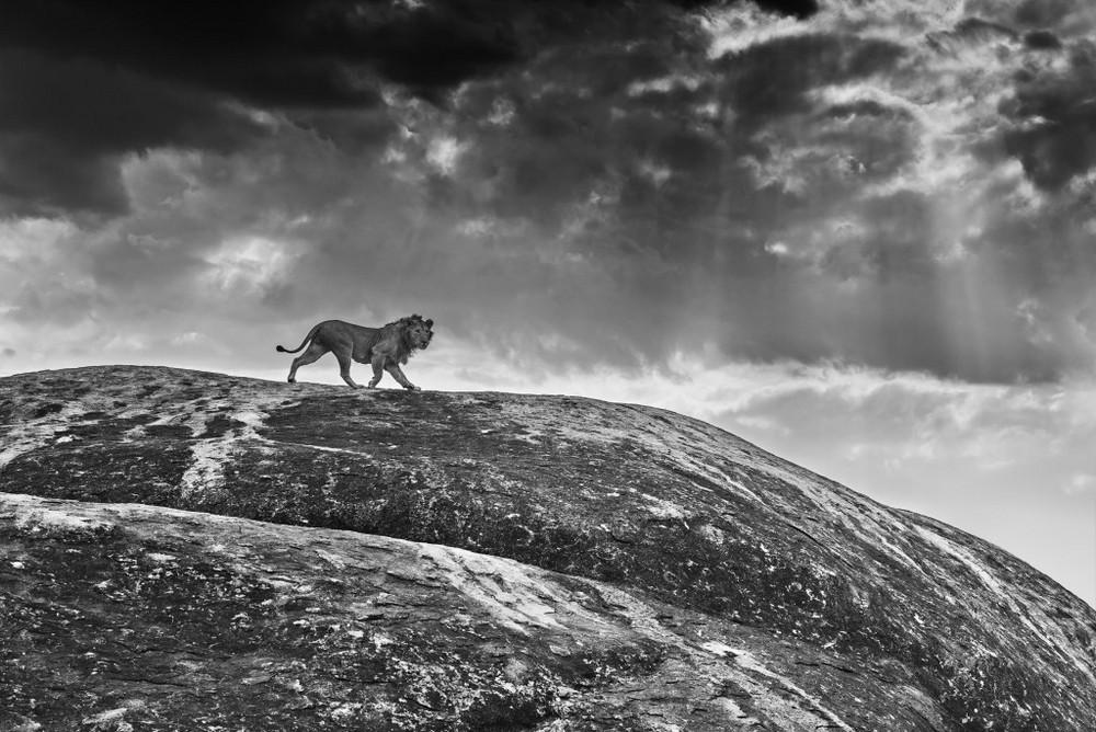 Фотограф Дэвид Ярроу: «Дикие встречи»