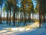 Зимы волшебные красоты.