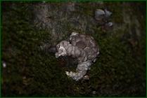 http://img-fotki.yandex.ru/get/199051/15842935.413/0_f160a_dab3657e_orig.jpg