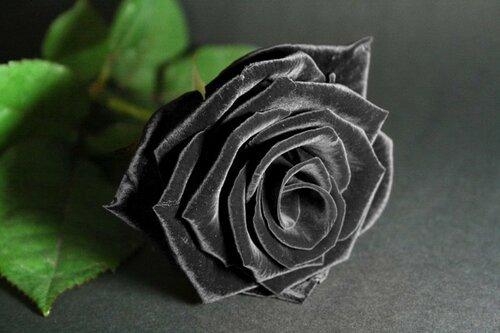 kadife-renginde-siyah-guel-resmi.jpg
