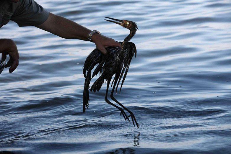 13. Птица в нефти